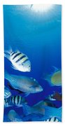 Saipan Marine Life Bath Towel