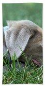 Silver Labrador Retriever Puppy  Bath Towel