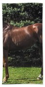 Thoroughbred Stallion Bath Towel