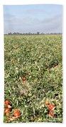 Tomato Field, California Bath Towel