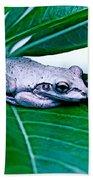 Tree Frog On Desert Rose  Bath Towel