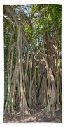 Trees With Aerial Roots At The Coba Ruins  Bath Towel