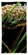 Water Beetle Brooding Eggs Bath Towel