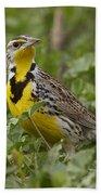 Western Meadowlark Hand Towel