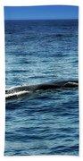Whale Watching Balenottera Comune 3 Bath Towel