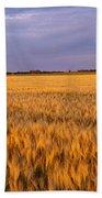 Wheat Crop In A Field, North Dakota, Usa Bath Towel