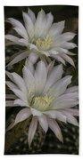 White Echinopsis Bath Towel