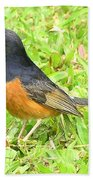 White-rumped Shama Bath Towel