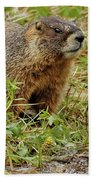 Yellow-bellied Marmot Bath Towel