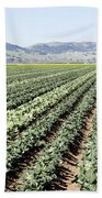 Young Broccoli Field For Seed Production Bath Towel
