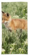 Young Red Tailed Fox Bath Towel