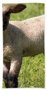 Spring Lamb Bath Towel