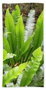 Rainforest At Foxground, Kiama Bath Towel
