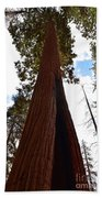 Giant Sequoia Trees Bath Towel