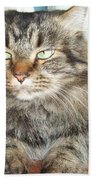 Maine Coon Cat Bath Towel