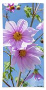Fully Bloomed Pink Dahlia Imperialis At Garden In November Bath Towel