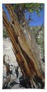1n6956 Methuselah Tree Bath Towel