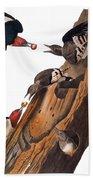 Audubon: Woodpecker Bath Towel