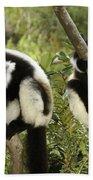 Black And White Ruffed Lemur Hand Towel