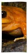 Chilean Tomato Frog Bath Towel