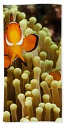 Clown Anemonefish Bath Towel