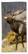 Early Morning Bull Elk Bath Towel