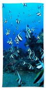 Hawaiian Reef Scene Bath Towel