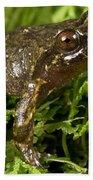Mehu�n Green Frog Bath Towel