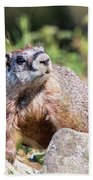 Mr. Marmot Bath Towel