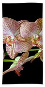 Orchid Phalaenopsis Flower Bath Towel