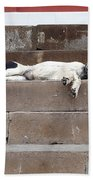 Street Dog Sleeping On Steps Bath Towel