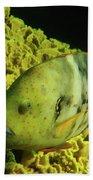 Underwater Photography Hand Towel