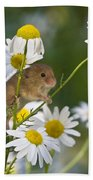 Young Eurasian Harvest Mouse Bath Towel