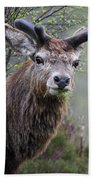 Red Deer Stag Bath Towel