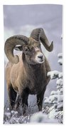 25084, Bighorn Sheep, Winter, Jasper Bath Towel