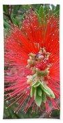 Australia - Callistemon Red Flower Bath Towel