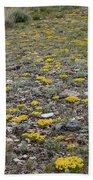2d07512 Prairie Zinnia In Lost River Range Bath Towel
