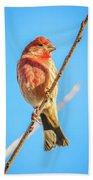 House Finch Tiny Bird Perched On A Tree Bath Towel