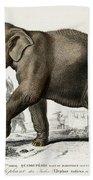 Indian Elephant, Endangered Species Bath Towel