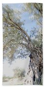 Olive Trees Bath Towel