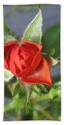 Red Rose Blooming Bath Towel