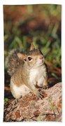 3- Squirrel Bath Towel