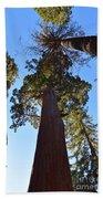 Giant Sequoia Trees Bath Towel