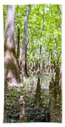 cypress forest and swamp of Congaree National Park in South Caro Bath Towel