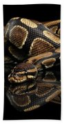 Ball Or Royal Python Snake On Isolated Black Background Hand Towel