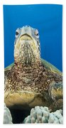 Hawaii, Green Sea Turtle Bath Towel