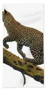 Leopard Panthera Pardus Climbing Bath Towel