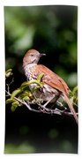 4979 - Brown Thrasher Bath Towel