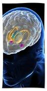 Anatomy Of The Brain Bath Towel