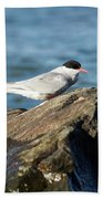 Arctic Tern Bath Towel